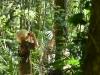 costa-rica-cloud-forest-boy