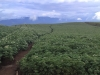 costa-rica-agriculture-mountains