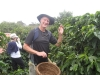 costa-rica-collecting-coffee-beans-tour