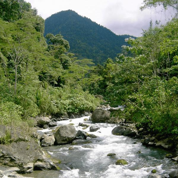 Costa Rica Rainforest: Arenal