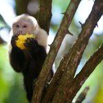 Avid Explorer Costa Rica Vacation Itinerary