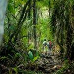 Costa Rica Rainforest: Corcovado National Park
