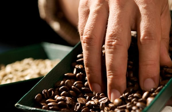 Costa Rica Coffee Plantation Tours
