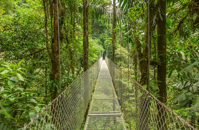 Costa Rica hanging bridge.