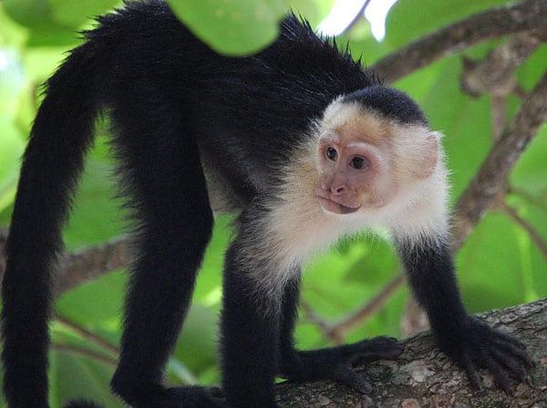 Manuel Antonio Wildlife Tours (Biodiversity)