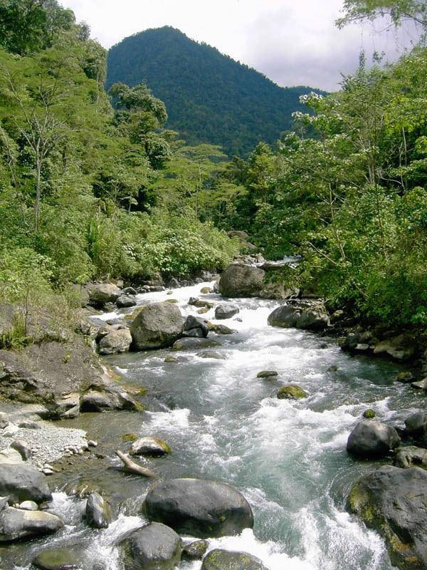 Costa Rica Rainforest Tours (Days 4-6)