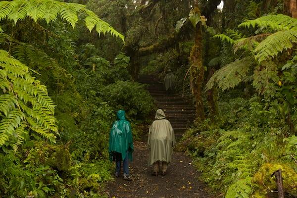 hiking-barva-volcano-national-park