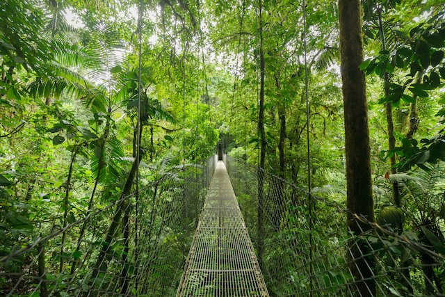 Hanging Bridge in Monteverde