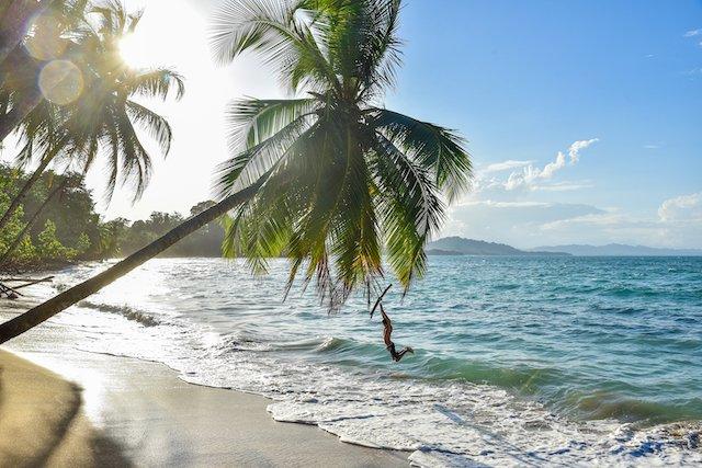 Punta Uva Beach, Costa Rica: Person swinging from palm tree
