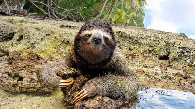 sloth-in-cahuita-costa-rica